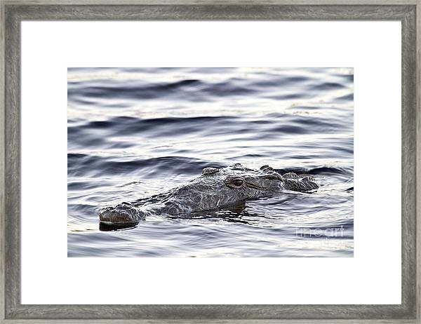 What I See Framed Print by Rodney Cammauf