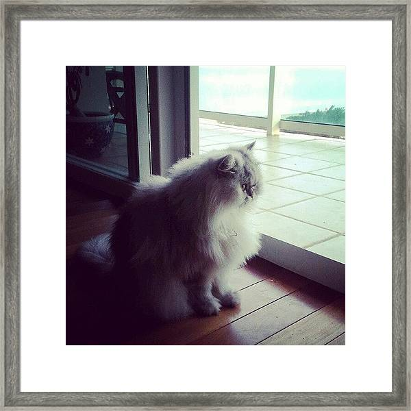 What's Out There For Me Today? Framed Print