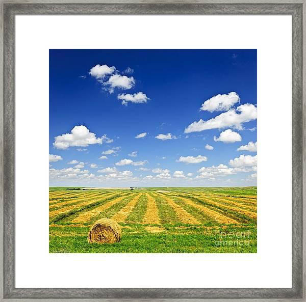 Wheat Farm Field At Harvest Framed Print