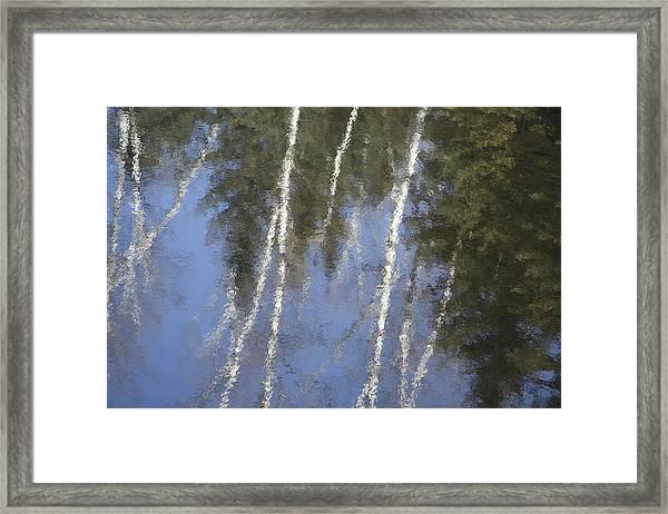 White Birch Trees Framed Print by Carolyn Reinhart
