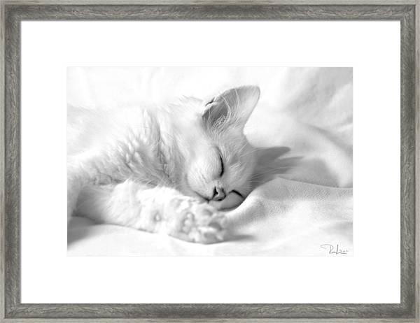White Kitten On White. Framed Print