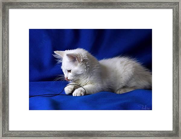 White Kitty On Blue Framed Print