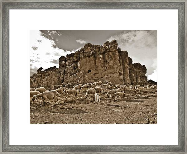Framed Print featuring the photograph Guzelyurt, Turkey - White Lamb by Mark Forte
