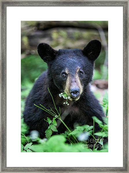 Wildflower Bear Framed Print