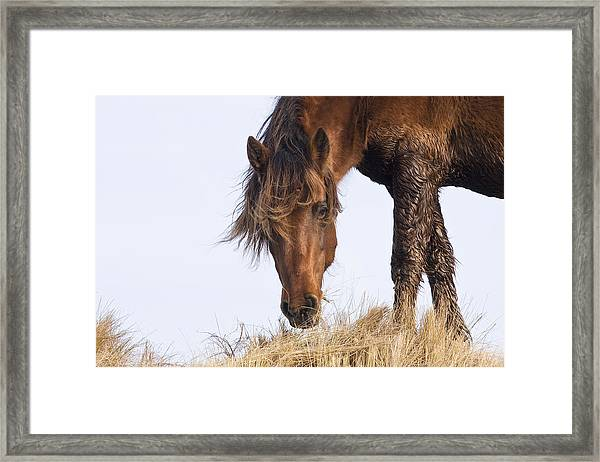 Wildhorse On The High Dunes Framed Print