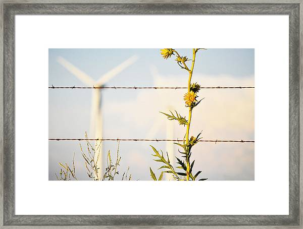 Wind Blown Framed Print