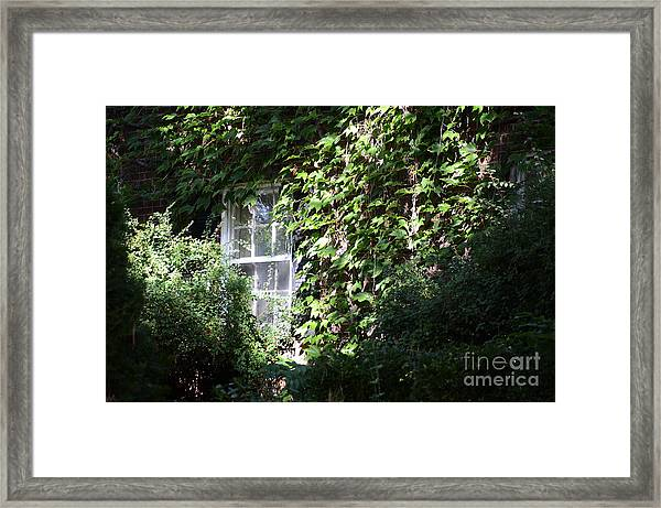 Window And Vines Framed Print