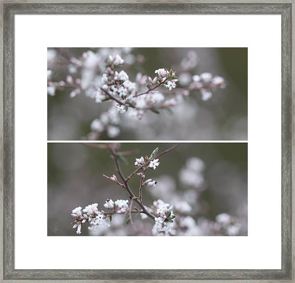 Winter Diptych Framed Print by Margaret Hormann Bfa