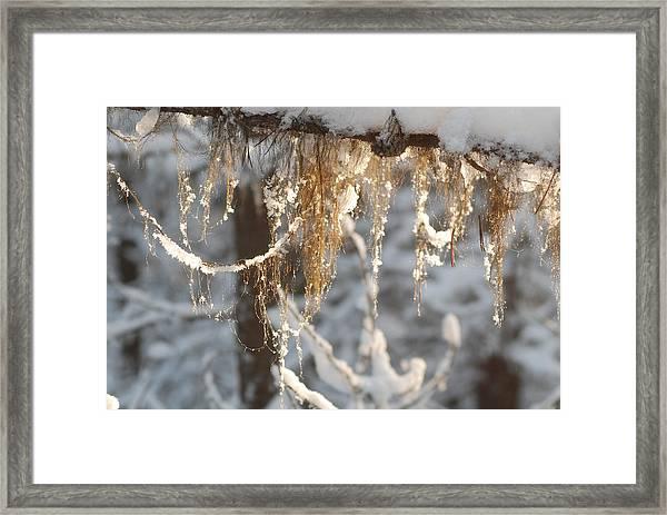 Winter Frost Beards Framed Print