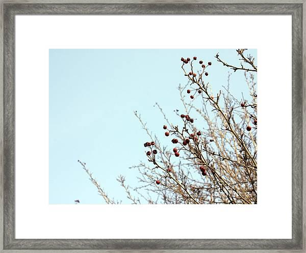 Winter's End Framed Print
