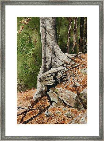 Wishing Tree Framed Print by Carla Dabney