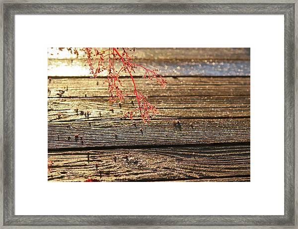 Wood Deck Red Sprig Framed Print