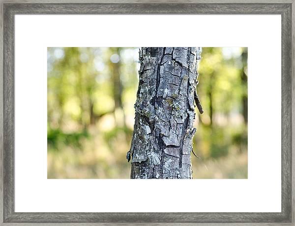 Woods At Dusk Framed Print