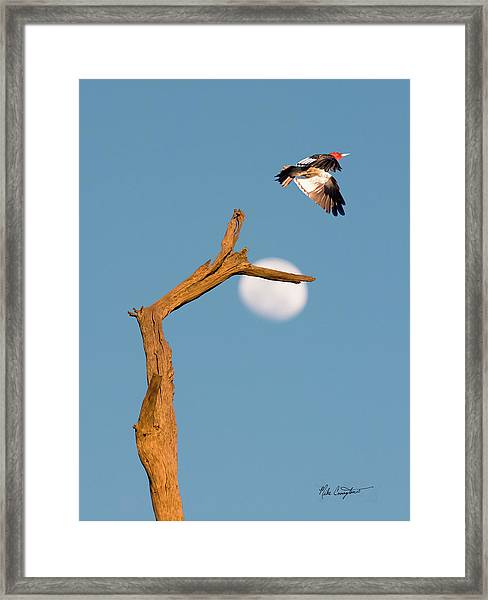 Woody Flying By The Moon Framed Print
