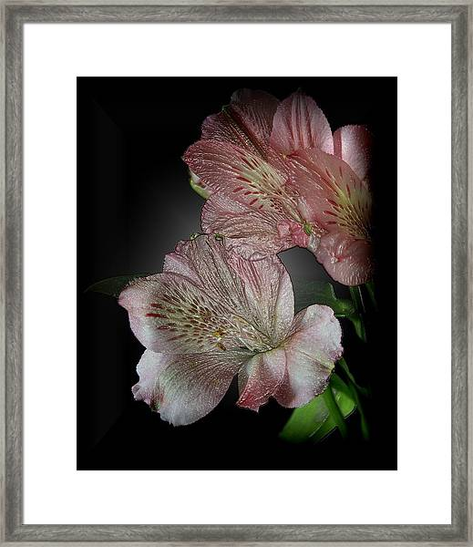 Wrapped In Plastic Framed Print