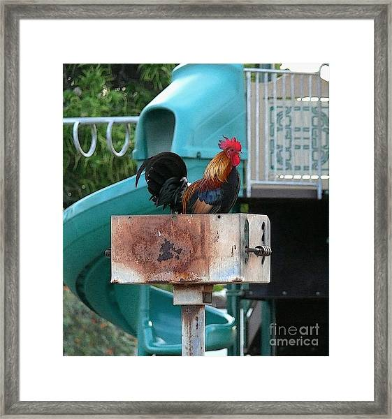 Wrong Playground Mr Rooster Framed Print by Terri Thompson
