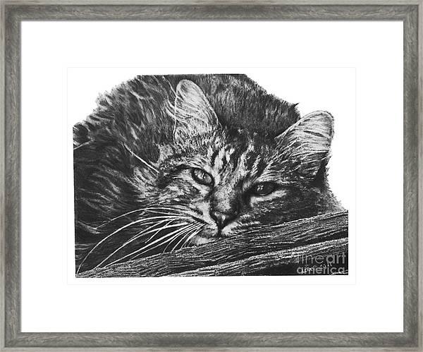 Wyatt Framed Print