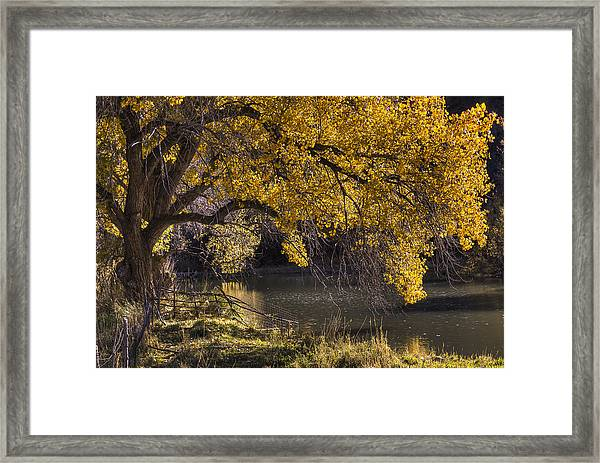 Yell Oh Yellow Framed Print