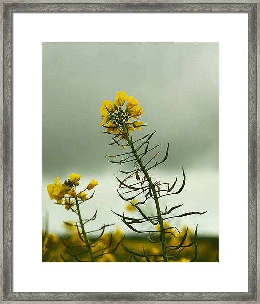 Yellow And Grey Framed Print