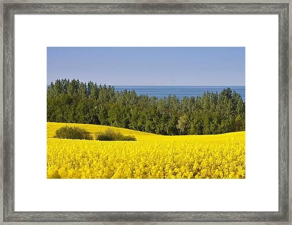 Yellow Blue Green Framed Print