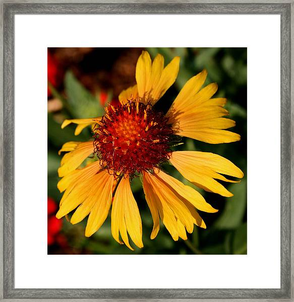Yellow Glow Framed Print