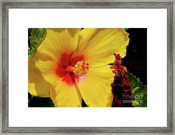 Yellow High Framed Print