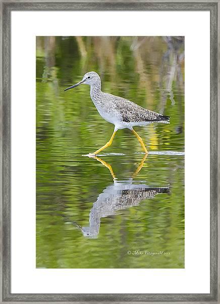 Yellow Legs Framed Print