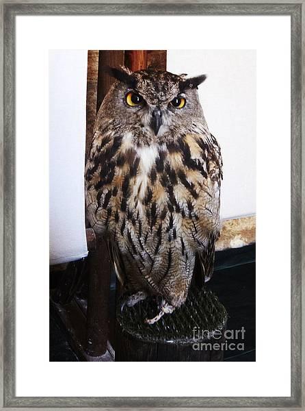 Yellow Owl Eyes Framed Print