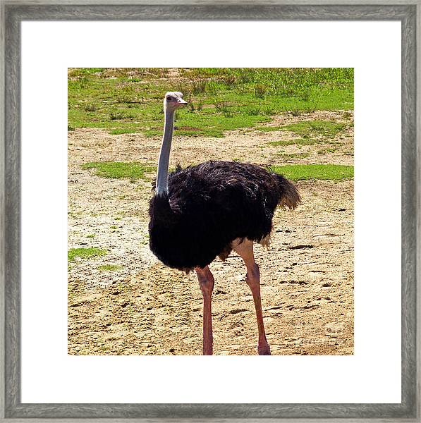 You Look At Me I Look At You Framed Print