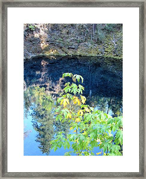 Young Maple At Blue Pool Framed Print