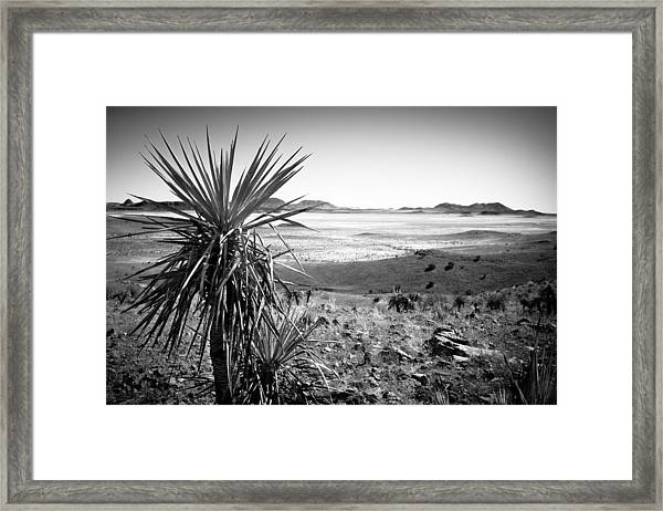 Yucca With A View Framed Print