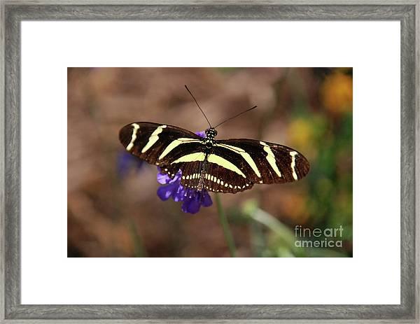 Zebra Too Framed Print