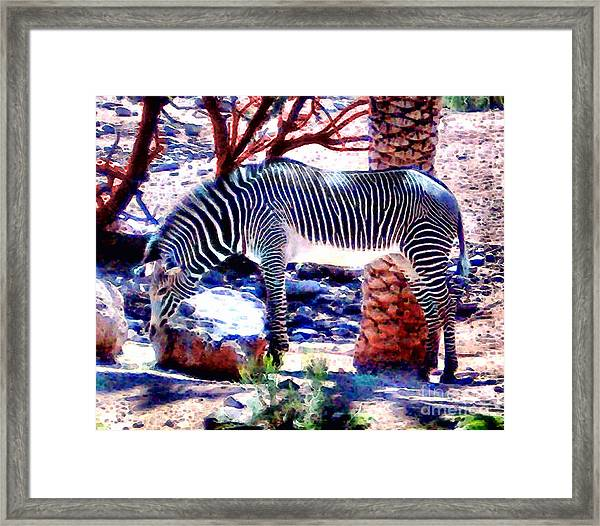 Zoo Patterns Framed Print