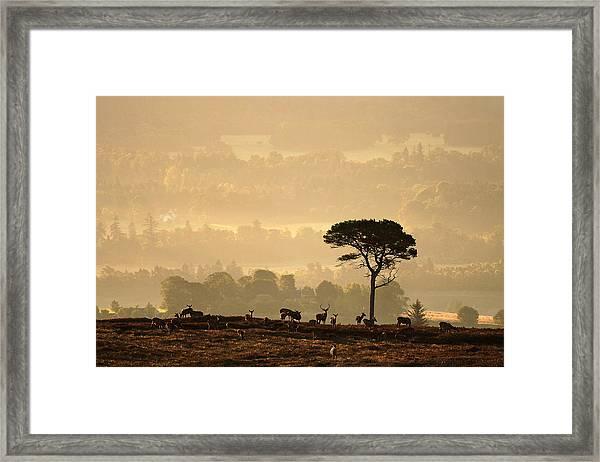 Autumn Morning, Strathglass Framed Print