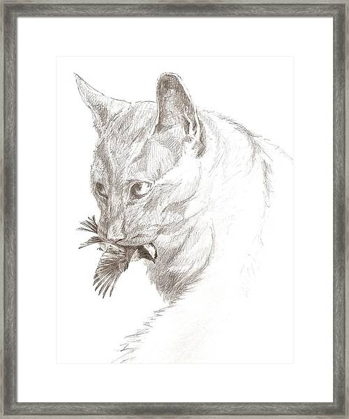Cat And Chickadee Framed Print