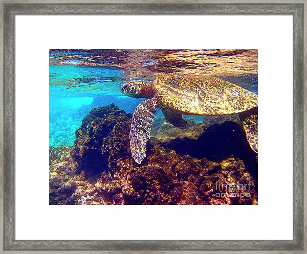 Honu On The Reef Framed Print