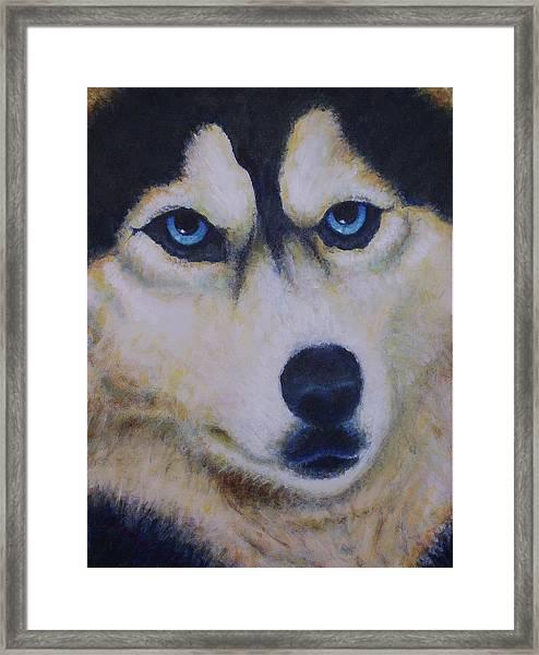 Husky For Cyrus Framed Print