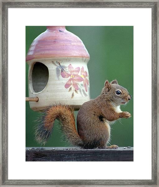 Squirrel Chatter Framed Print