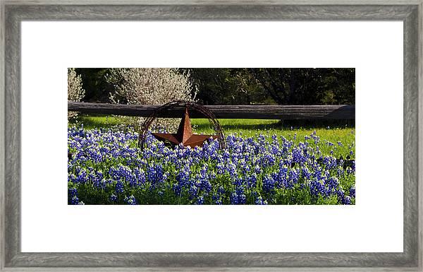 Texas Bluebonnets IIi Framed Print