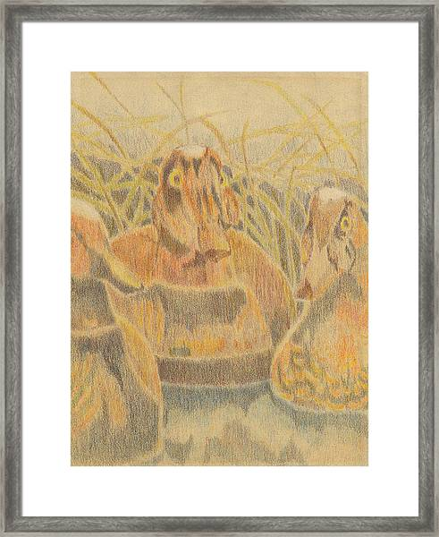 Wooden Duck Decoys Framed Print