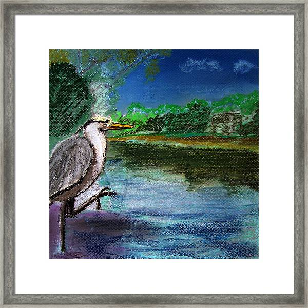 071115 Blue Heron Pastel Sketch Framed Print