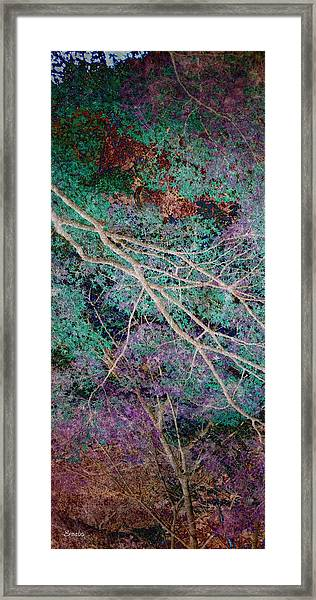 A Forest Of Magic Framed Print