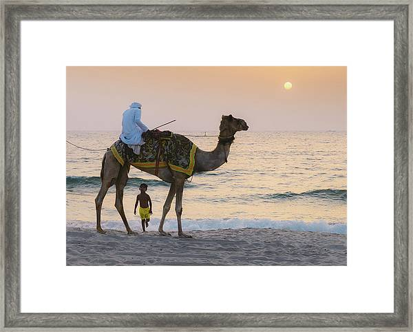 Little Boy Stares In Amazement At A Camel Riding On Marina Beach In Dubai, United Arab Emirates -  Framed Print