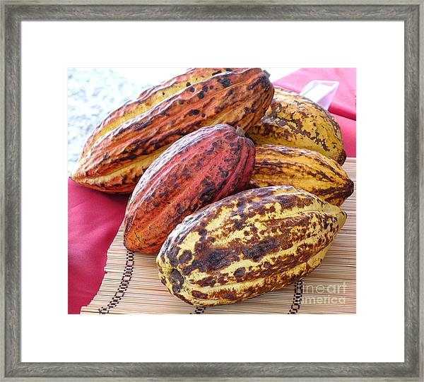 A Pile Of Cacao Pods Framed Print