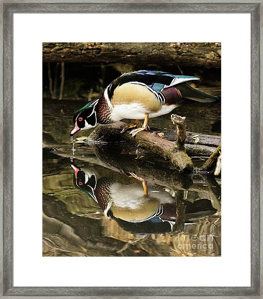A Sip For You And Me Wildlife Art By Kaylyn Franks Framed Print