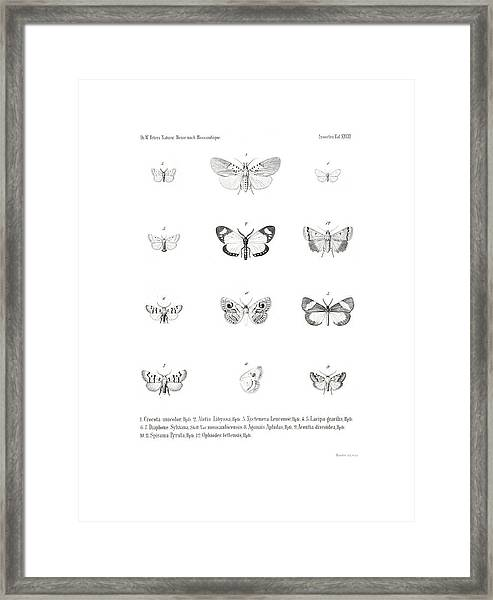 Framed Print featuring the drawing African Butterflies by Bernhard Wienker