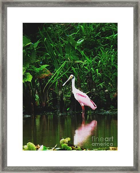Along A River Road Framed Print by Deborah Chase