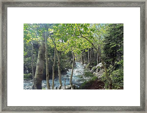 Along Alberta Falls Trail Rocky Mountain National Park Framed Print