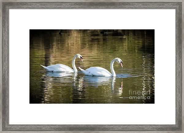 Always Together Wildlife Art By Kaylyn Franks Framed Print
