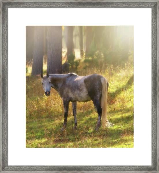 Ambient Grace Framed Print